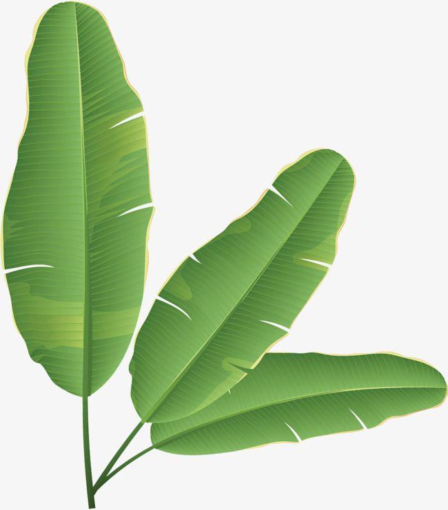 Vector Illustration Banana Tree Vector Art Illustration Tree Illustration Banana Tree Digital Flowers