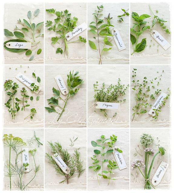 herb project; photograph all the herbs growing in garden, frame and hang in kitchen.