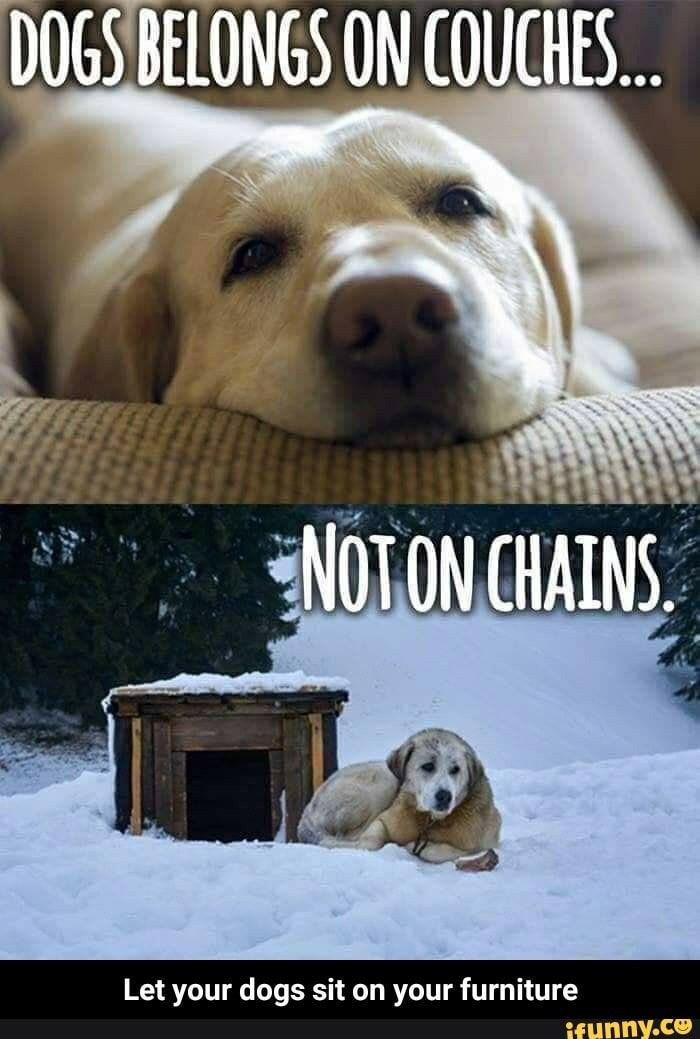 Let Your Dogs Sit On Your Furniture Ifunny Dogs Dog Sitting Funny Animals