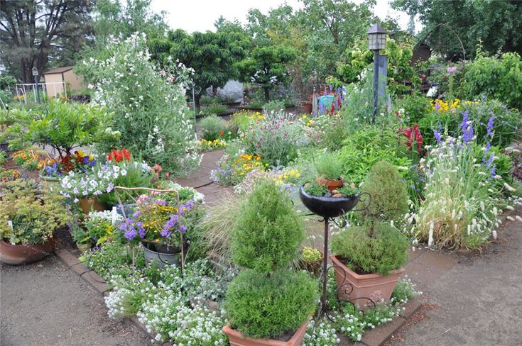 Basils For Your Edible Landscape likewise Watch further Gartengestaltung 2015 Baume Steine Ziergraser in addition Perennial Aster Flower Plants 1316032 moreover Best Ornamental Grasses For Containers Growing Ornamental Grass. on small flower garden landscaping ideas