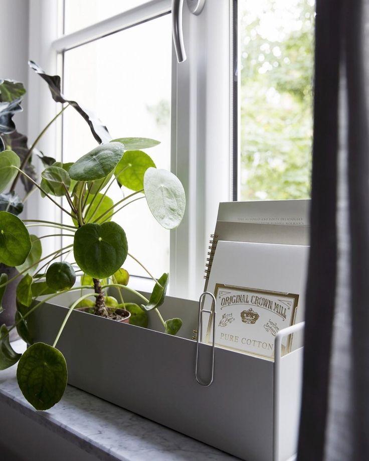 Greens on my bedroom window sill