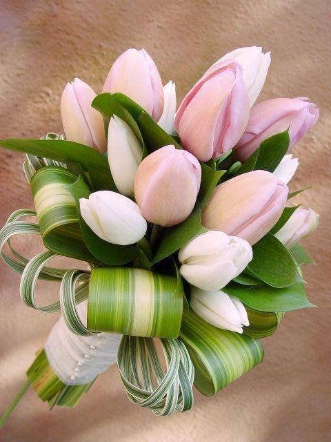 Tulipán ♥