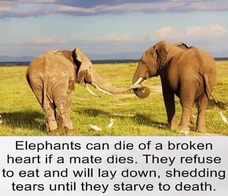 Elephant Fact