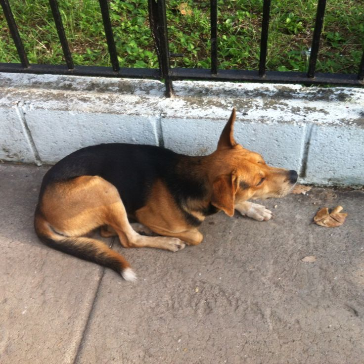 Homeless dog Wanted to keep it
