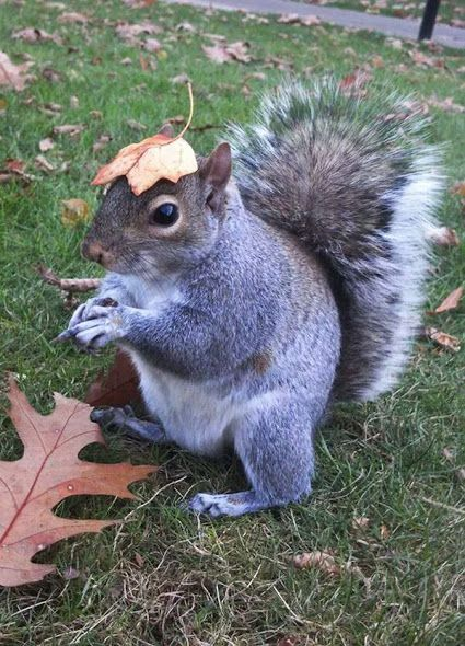 Squirrels are highly intelligent and have developed their own means of sun safety by wearing leaves on their heads to shield themselves from the sun's (UV) rays.