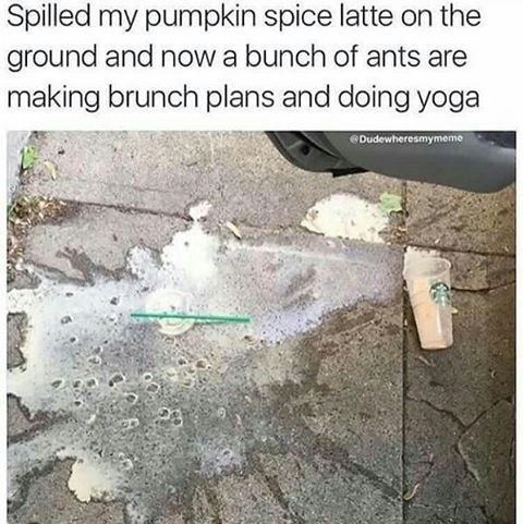 Keepin these pumpkin spice memes rollin! Almost at the one week mark haha. #pumpkinspice