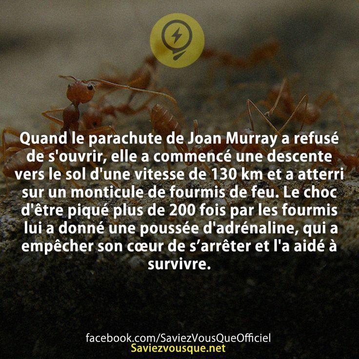 Quand le parachute de Joan Murray a refusé de s'ouvrir, elle a commencé une descente vers le sol d'une vitesse de 130 km et a atterri sur un monticule de fourmis de feu. Le choc d'être piqué plus de 200 fois par les fourmis lui a donné une poussée d'adrénaline, qui a empêcher son cœur de s'arrêter et l'a aidé à survivre. | Saviez-vous que ?