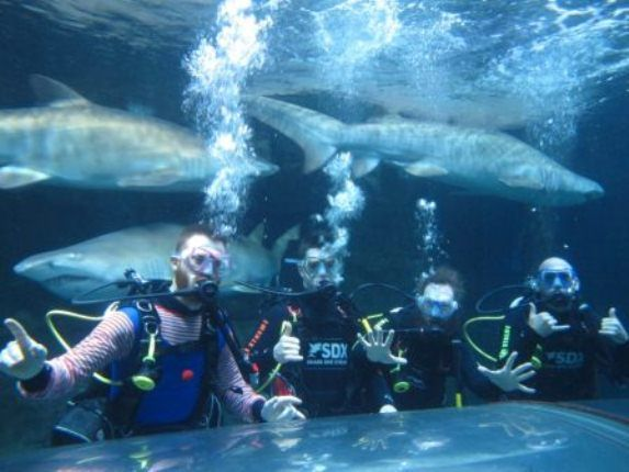 #Manly_Sea_life_Sanctuary: - It is one of the leading visitor attractions on Sydney's northern beaches offering fun for the whole family. Come face to face with incredible marine animals through daily interactive shows and guided tours. So book low fare flights to Sydney from London and visit this major attraction of city.