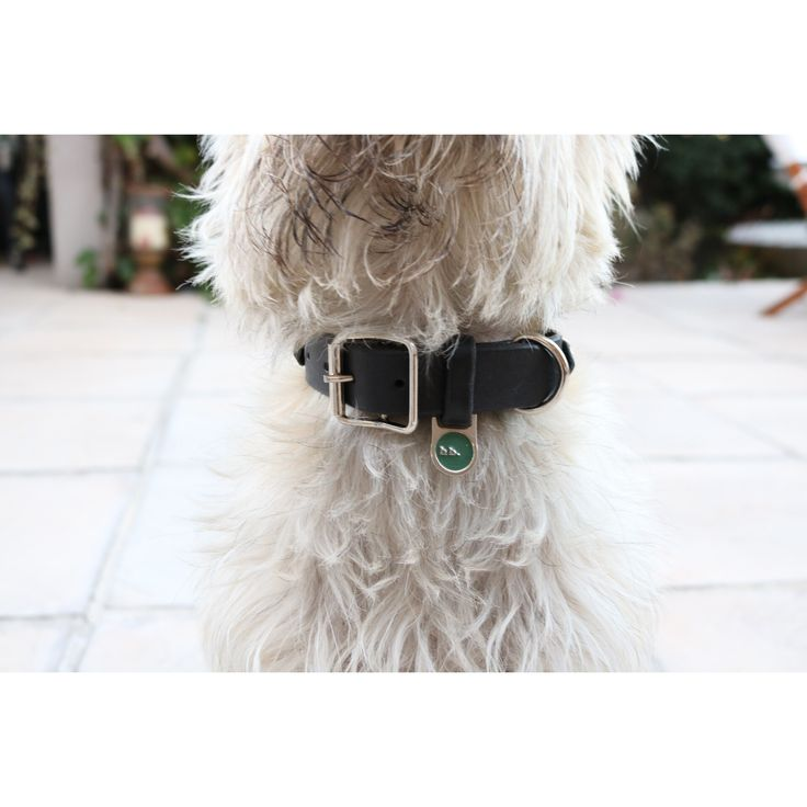 shop online. beautifully handcrafted leather dog collars and leads. made in cape Town, South Africa.