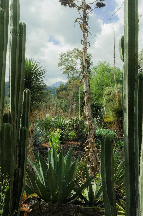 Jardin Botanico UNAM. by Alberto Salgado on 500px