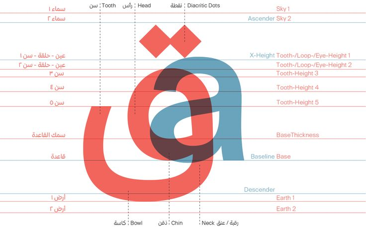 Arabic-type-anatomy-2