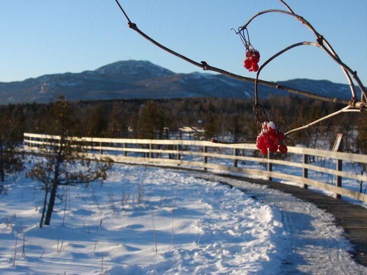 Article+:+Les+plus+beaux+sentiers+où+marcher+cet+hiver:+6+destinations+: