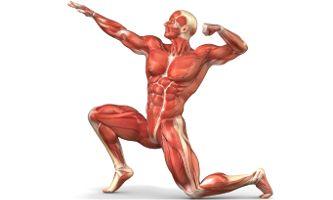 Con la ayuda del masaje, se puede eliminar la sensación de rigidez, el dolor y la inflamación de los músculos. El procedimiento del masaje reduce significativamente el contenido de ácido láctico en los músculos, que es beneficioso para su salud y aumenta su tono y el estado funcional general.