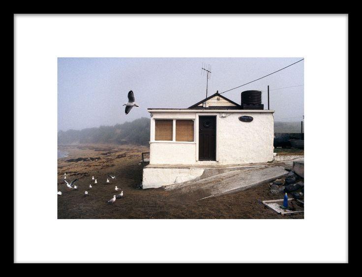 Robin Morrison - Crib and gull, Moeraki, Otago