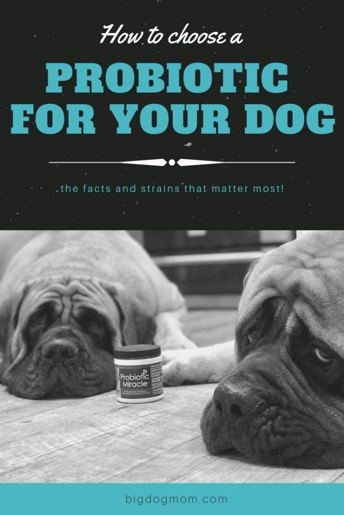 Probiotics For Dogs The Facts And Strains That Matter Most