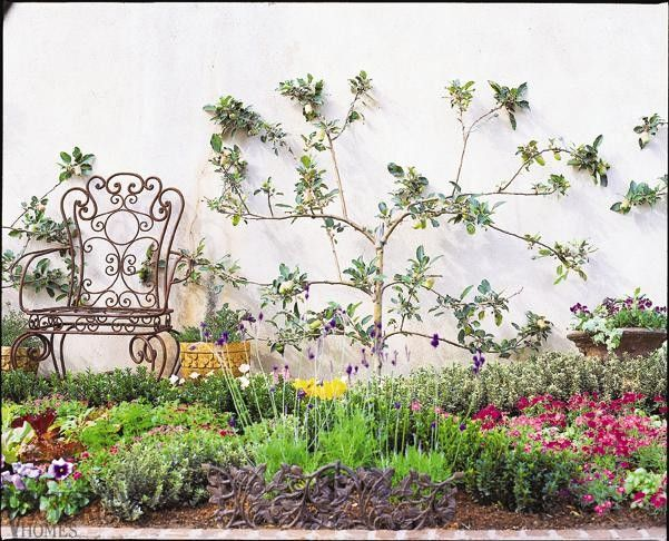 395 best garden espalier fruit trees images on pinterest for Victorian garden trees