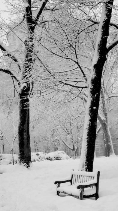 It doesn't take much to look beautiful in pure white snow ... just a couple trees and a bench.: Winter Snow, Snow Fall, Parks Benches, Snow Scene, Winter Wonderland, White Christmas, Graphics Design Posters, Snowy Parks