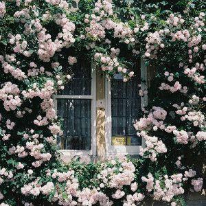 Greige Bunny Mellon via Veranda Landscape Design by Miranda Brooks Landscape Design by Miranda Brooks Veere Greeney Residence […]