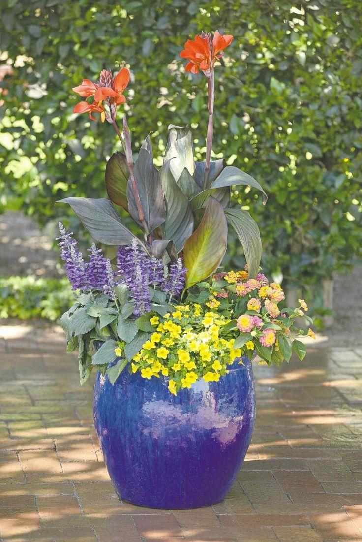 Cannova Canna Lilies | Flower pots, Canna lily, Plants