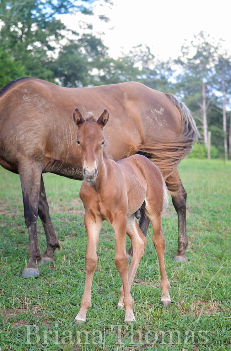 13 best horses images on pinterest horse rocky mountains and amish we have a new foal and he needs a name rocky mountain horse aiddatafo Gallery