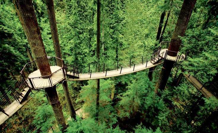 At the Capilano Suspension Bridge Park, a long pedestrian bridge leads to treetop decks and crows nests throughout the Park.  Fun for all ages.
