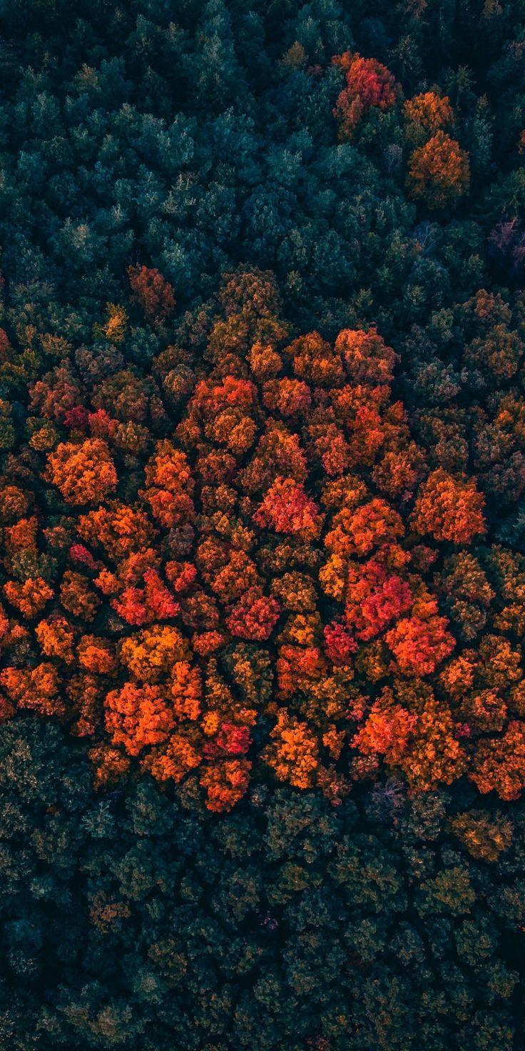 Trees peak, forest, trees, aerial view, 1080×2160 wallpaper – Juan Carlos Rosa-Medina