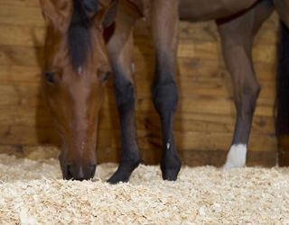 Horse Bedding Choices to Suit Every Stable