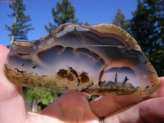 montana dendritic agate | dendritic agate