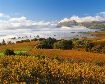 Autumn in Stellenbosch