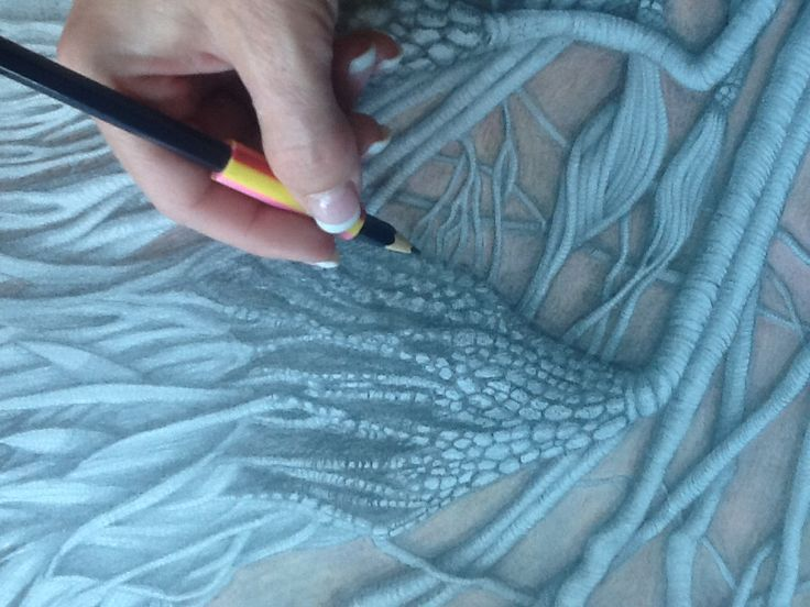 Crinoid Fossil in sandstone: pencil and colored pencil on acid free paper.