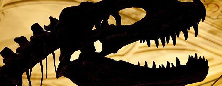 The skull of a T. rex in silhouette