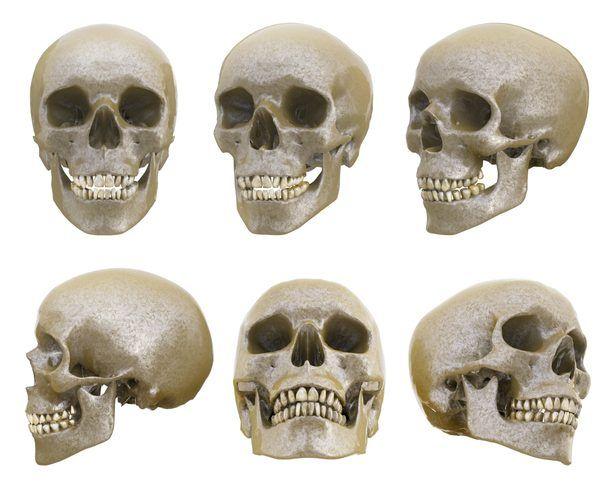 Estructura de un cráneo humano