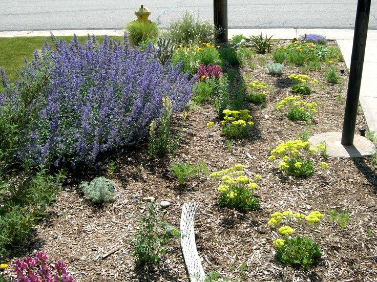 Flower Garden Ideas Colorado flower garden ideas colorado find this pin and more on high