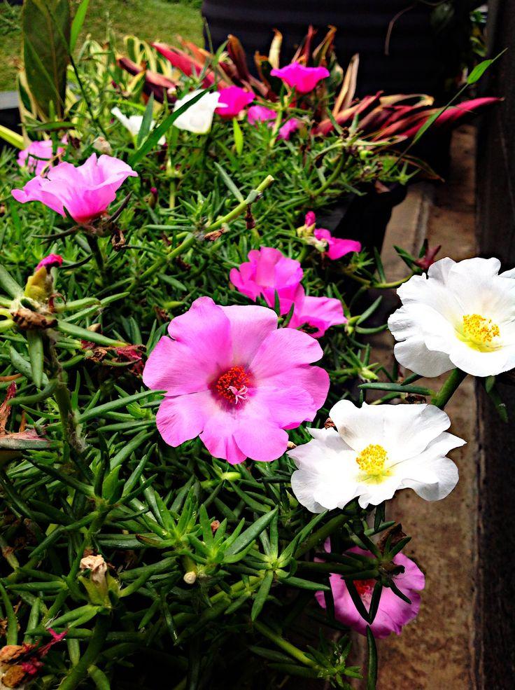 Flower blooms.  Gino Feruci Braga Hotel Jl Braga No.67 Bandung