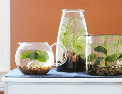 Indoor Water Garden http://www.homemadesimple.com/en-US/Garden/pages/easy-indoor-water-gardens.aspx?utm_source=Article&utm_medium=HD%2BArticle&utm_campaign=At%2BHome%2BEscape