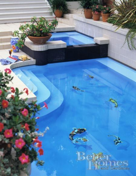 118 best images about swimming pools back yard splash pads for Fish swimming backwards