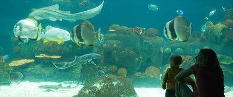 Delights Are Deep At Minnesota Aquariums Onlyinmn