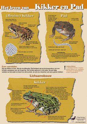 Educatieve kaart het leven van Kikker en Pad, http://iturl.nl/snRlc