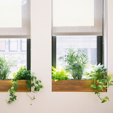 interior landscaping plants see more commercial design services thesillcom