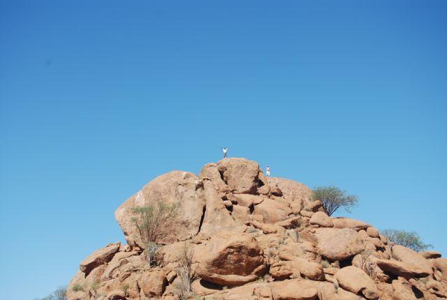 Mowani - Namibia - climbed to the top!