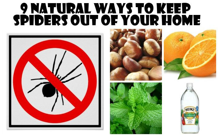 9 Natural Ways to Get Rid Of Spiders in Your Home