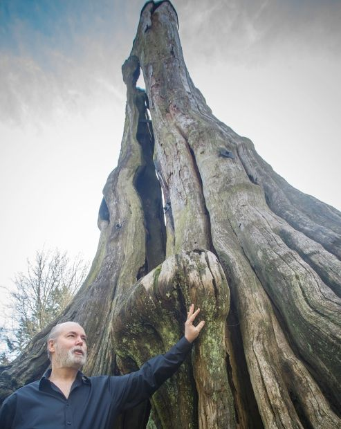 Q&A: Douglas Coupland to create golden replica of iconic Hollow Tree