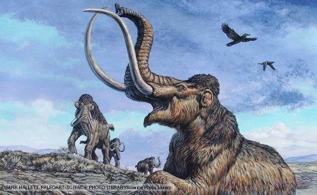 BBC Nature - Columbian mammoth videos, news and facts