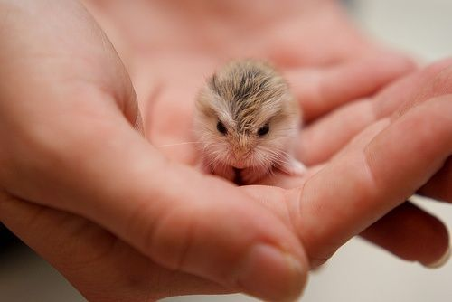Baby owl! Awwww! A baby mouse is more like it.