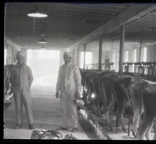 Brown dairy, Kentucky Utilities Company (Winchester, Ky.) :: William B. Ogden Studio Negatives Collection