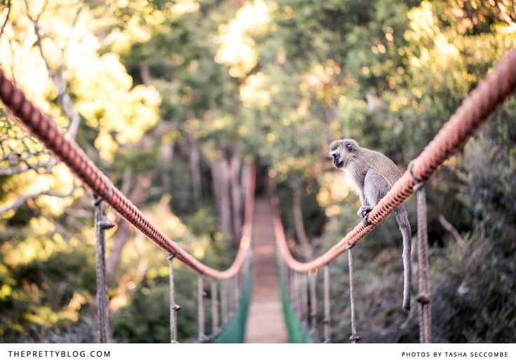 Photograph of little monkey at Monkeyland | Fairview, Plettenberg Bay | Photography: @Tasha Adams Seccombe