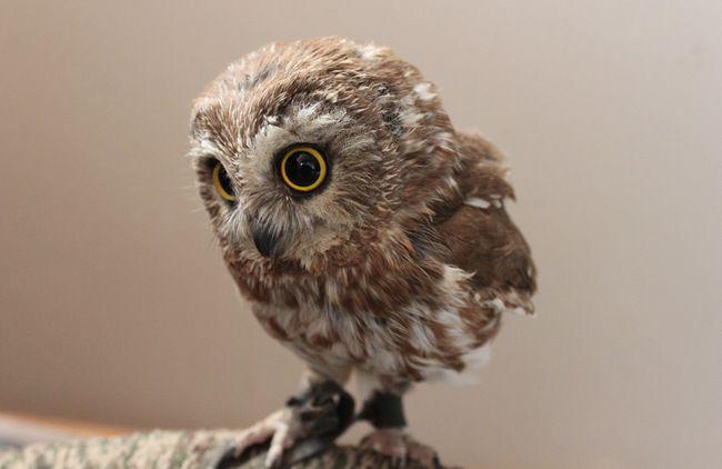 owl03                                                                                                                                                                                 もっと見る