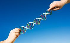How to Rewire Your Genetics: Hacking the MTHFR Gene Mutation - The Daily Beast