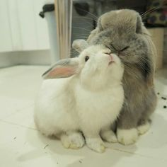 Fluffy Bunny Naps With His Human: http://cutesypooh.com/fluffy-bunny-naps-human/