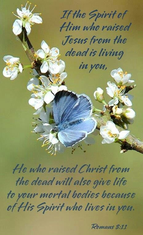 Romans 8:11 (KJV)  11 But if the Spirit of him that raised up Jesus from the dead dwell in you, he that raised up Christ from the dead shall also quicken your mortal bodies by his Spirit that dwelleth in you